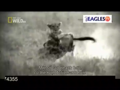 Eagles TV